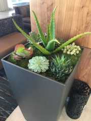 interior-plantscape-plants-for-businesses-san-diego-4