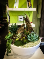 interior-plantscape-plants-for-businesses-san-diego-5