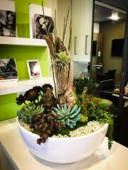 interior-plantscape-plants-for-businesses-san-diego-6