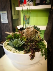 interior-plantscape-plants-for-businesses-san-diego-7