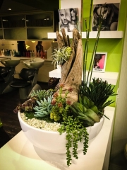 interior-plantscape-plants-for-businesses-san-diego-8