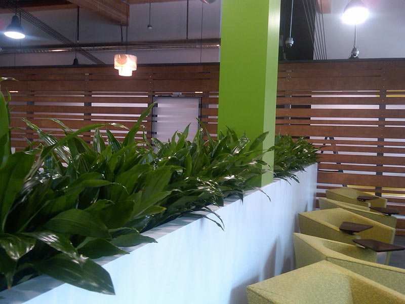 Plants for lobbies plants for offices courtyards and patios for Interior landscaping ideas