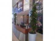 commercial-interiorscape