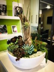 interior-plantscape-plants-for-businesses-san-diego-6