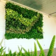 green-wall-san-diego-051518