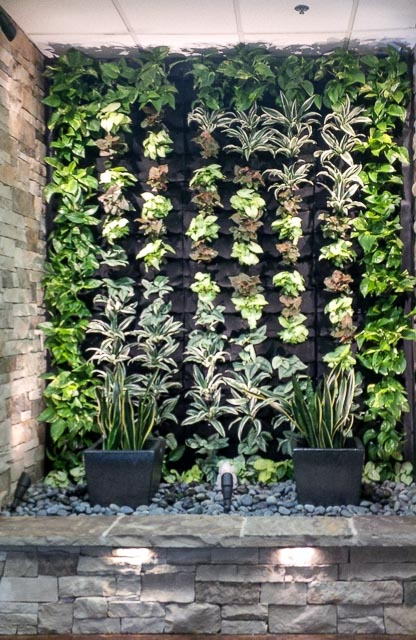 Here are some photos of some of our Living Green Wall Projects in the San  Diego area.