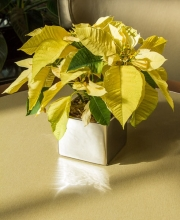 holiday-seasonal-decor-14