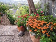 patio_and_color_bowls_072