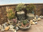 patioscape-san-diego-container-landscape-18-4
