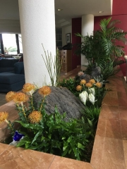 interior-plantscape-plants-for-homes-san-diego-18-2