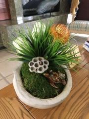 interior-plantscape-plants-for-homes-san-diego-18-7