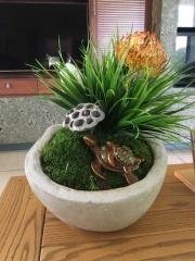 interior-plantscape-plants-for-homes-san-diego-18-8
