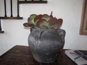 residential-indoor-plants