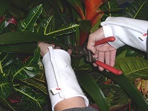Plant maintenance for office plants house plants all san - Interior plant maintenance contract ...