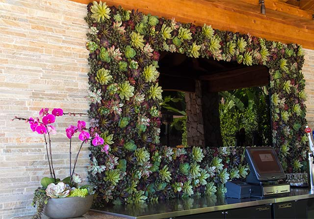 Succulent Living Wall Plant Design Painting With Plants San Diego Area