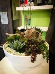 interior-plantscape-plants-for-businesses-san-diego-7