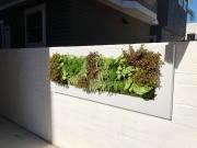 Living-Green-Walls-San-Diego-2019-2