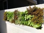 Living-Green-Walls-San-Diego-2019-3
