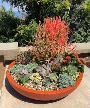 succulent-bowl-patio-scaping-san-diego-040518-r1