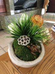 interior-plantscape-plants-for-homes-san-diego-18-7