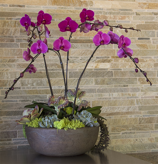 Orchid color-bowl with succulent under plantings San Diego area