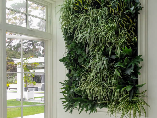 A Living Green Wall in San Diego