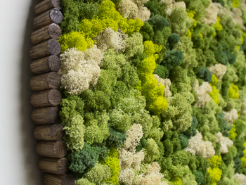 Moss Art Plant Services in San Diego